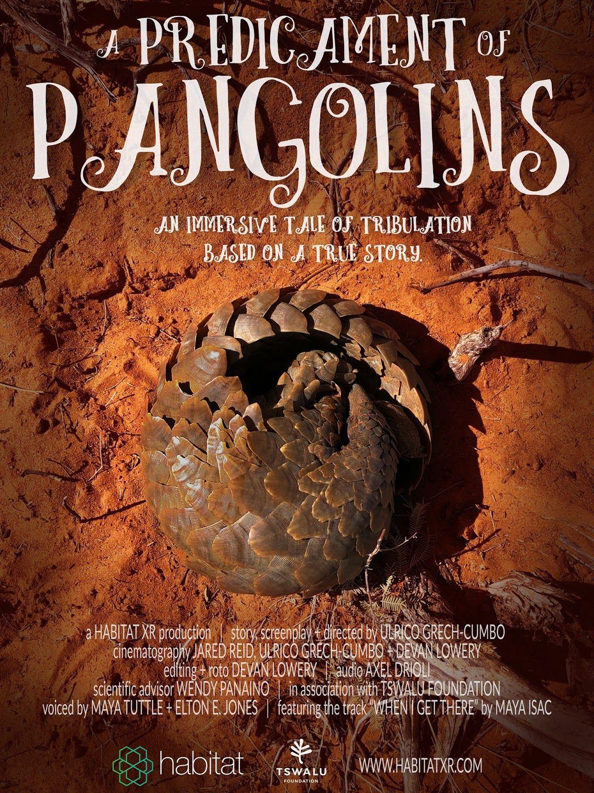 A predicament of pangolins
